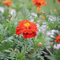 Цветочный хоровод-291. :: Руслан Грицунь