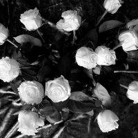 Белые  розы... :: Валерия  Полещикова