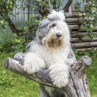 Мишка на дереве :: Лариса Батурова