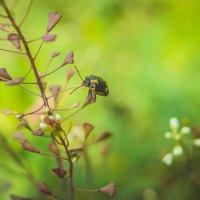 Маленький мир букашки :: Света Кондрашова