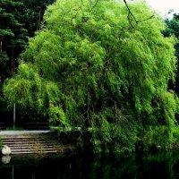 Путь к воде :: Violetta Glazkova
