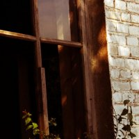 Немножко жизни у мёртвого окна :: Violetta Glazkova