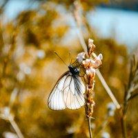 бабочка :: Кирилл Богомазов