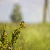 Птица :: Stas Malyshev
