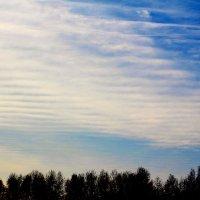 весеннее небо :: Ольга (Кошкотень) Медведева