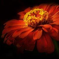 summer beauty :: LuVladi -M ...