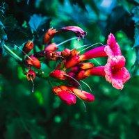 какие-то цветоки) :: Kristi K.