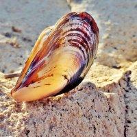 Дети моря :: Swetlana V
