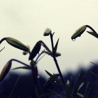 После дождя :: Mikeylink K.
