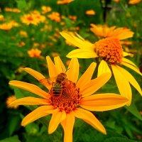 ..желтое  лето.... :: неля  тулузова