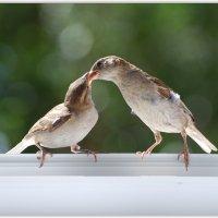 забота :: linnud