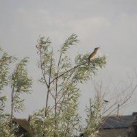 неведомая птичка :: Анастасия сосновская