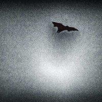летучая лисица острова Комодо :: Александр
