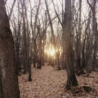 красивый осенний лес :: Аленка .