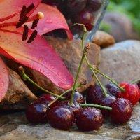 Лето вишневого цвета :: Олеся