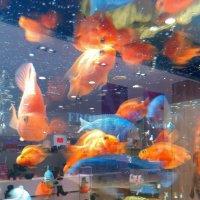 рыбки в... магазине :: Олег Лукьянов