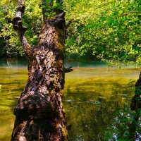 на лесной реке :: Андрей Козлов