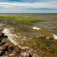 Берег Куршского залива :: Игорь Вишняков