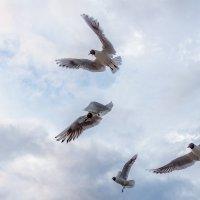 Воздушный бой :: Александр Творогов