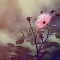 Аленький цветочек. :: Sergey Zimoglyad