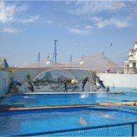 Севастопольский дельфинарий :: Эля Юрасова