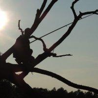 ода дереву :: sv.kaschuk