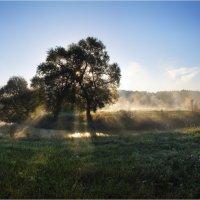 Свет и тень :: Сергей Шабуневич