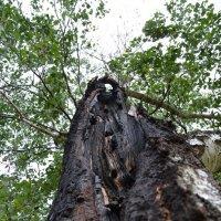 Дерево :: Sergey Волков