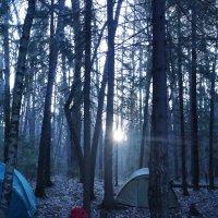 Утро в лесу :: Мария Спивак
