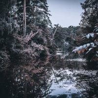 Лес :: Daria Snow