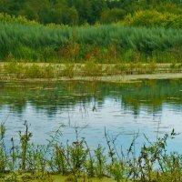 на озере :: Vasilisa Vasileva