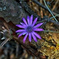 С цветка на цветок :: Marina Timoveewa