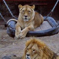 Царь и его царица :: Олег Пономаренко