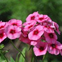 Пламя-цветок. :: Андрей Синицын