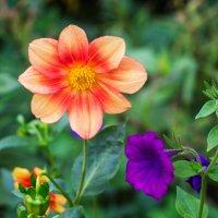 Цветы :: Леонид Никитин