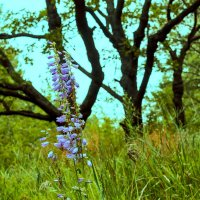 Лесной цветок :: Юрий Стародубцев