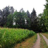 Путь ... дорожка ... :: Владимир Икомацких