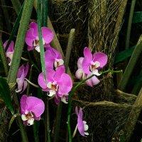 об орхидеях... :: Павел Баз
