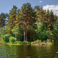 У лукоморья дуб зелёный... :: kolin marsh