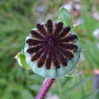 Шкатулочка с семенами.. :: ТАТЬЯНА (tatik)
