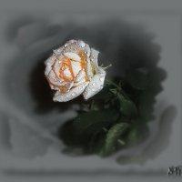 Блестят на лепесточках капли влаги, омывшей их от страсти и грехов... :: Людмила Богданова (Скачко)