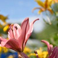 Цветы :: Сергей Гаврилин