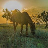Солнечный конь :: Елена Баландина