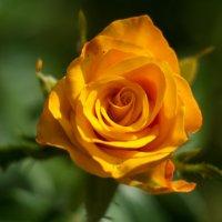 flower_93 :: Trage