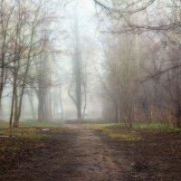 в тумане :: Ольга (Кошкотень) Медведева