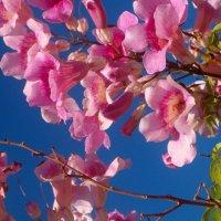 И цвет и свет! :: Герович Лилия
