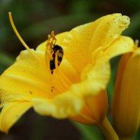 Жёлтый цветок :: Владимир Мухарский