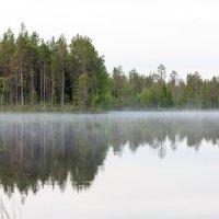 Музыка леса :: Мария Пилипенко