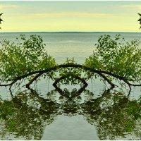 Фантазии на воде) :: Svetlana Kravchenko