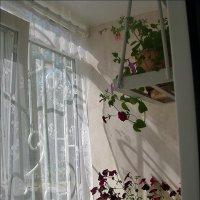 Навстречу солнечным лучам :: Нина Корешкова